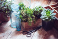 House plants green succulents old wooden box and blue vintage glass bottles on a wooden board home gardening and decorating rustic Royalty Free Stock Images