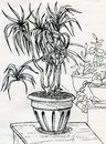 House plants in pots decorative palm tree on the table and some other nearby ink drawn sketch Royalty Free Stock Photography