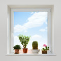 House plants on the windowsill spring Royalty Free Stock Photography