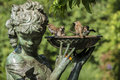 House sparrow passer domesticus i drinking and bathing in bird bath in central park Stock Images