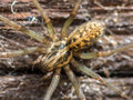 House Spider Macro