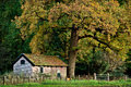 House under a big tree an old dutch huge beautiful in autumn Stock Photo