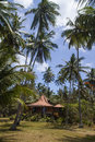 House under the palms branches of coconut Royalty Free Stock Photos