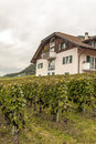 House with vineyards Royalty Free Stock Photo