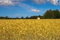 The house in wheat field. Finland Royalty Free Stock Photography