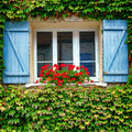 House window with geranium planter and shutters old red blue wood on building wall covered overgrown green vine in a quaint Stock Image