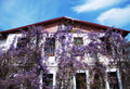 House with wisteria Stock Image