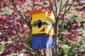 Nesting box, House wren feeds bug to babies in birdhouse Royalty Free Stock Photo