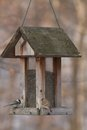 House wrens bird feeder Royalty Free Stock Photos