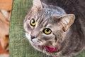 Housecat looks at camera Royalty Free Stock Photo
