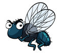 Housefly with angry face Royalty Free Stock Photo