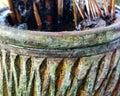 Houseplant in earthenware pot Royalty Free Stock Photo