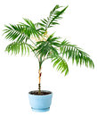 Houseplant isolated Royalty Free Stock Photo