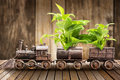 Houseplant and train Royalty Free Stock Photo