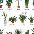 Houseplants seamless pattern