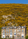 Houses in the hills terrace of at foot of gorse covered snowdonia national park barmouth gwynedd wales Stock Image