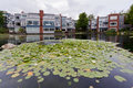 Houses on a lake with water lillys Vancouver Stock Photography