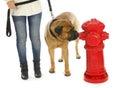 Housetraining dog Royalty Free Stock Photo