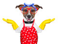 Housewife dog with open arms happy to help Stock Image