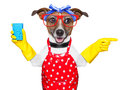 Housewife dog with rubber gloves pointing and looking to the side Royalty Free Stock Photography