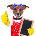 Housewife dog with rubber gloves and thumb up Stock Photos