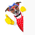 Housewife dog with rubber gloves and thumb up behind a blank space Stock Images