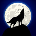 Howling wolf detailed illustration of a in front of the moon Royalty Free Stock Photo