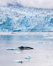 Hubbard Glacier Royalty Free Stock Images