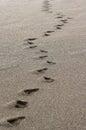 Huellas en el pebble beach Foto de archivo