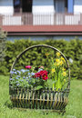 Huge basket full of colorful flowers in the garden on sunny summer day Royalty Free Stock Photos