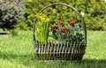 Huge basket full of colorful flowers in the garden on sunny summer day Stock Photography