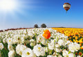 Huge beautiful balloon flies over the field of multi colored buttercups spring weather big picture was taken Royalty Free Stock Photos