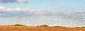 Huge Bird Flock