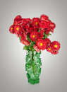 Huge bunch of  red autumn chrysanthemum flowers in green vase Royalty Free Stock Photo