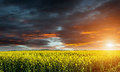 Huge canola colza rape field before storm with beautiful clouds Stock Photo