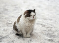 Huge cat in the park funny big a winter Stock Images