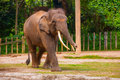 Huge elephant in the zoo