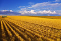 Huge field and small farm Royalty Free Stock Photo