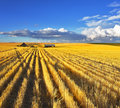 Huge fields of Montana after a harvest Royalty Free Stock Photo