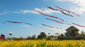 Huge kites with the long striped tails in the blue sky traditional balinese and dragon head flying over yellow field Stock Images
