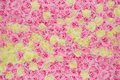 Huge pink and yellow roses background Royalty Free Stock Photo