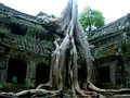 Huge tree attached with the temple in cambodia Stock Photography
