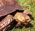 Huge turtle Royalty Free Stock Photography