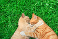 Hugging cats Stock Photos