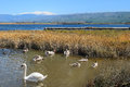 Hula Lake nature reserve, Hula Valley, Israel