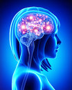 Human active brain Royalty Free Stock Photo