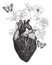 Human anatomical heart whith flowers.