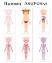 Human anatomy for kids