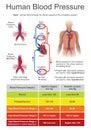 Human Blood Pressure