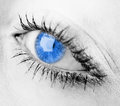 Human blue eye. Royalty Free Stock Image